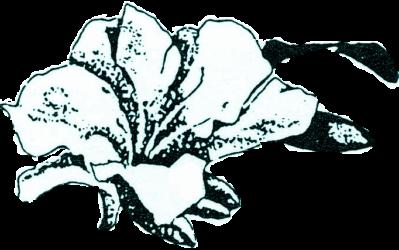 Azalea Society of America