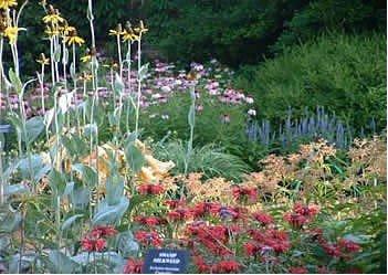 Flowers at Mesker Zoo Botanic Garden